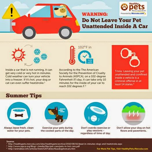 Don't leave your dog in the car in hot weather