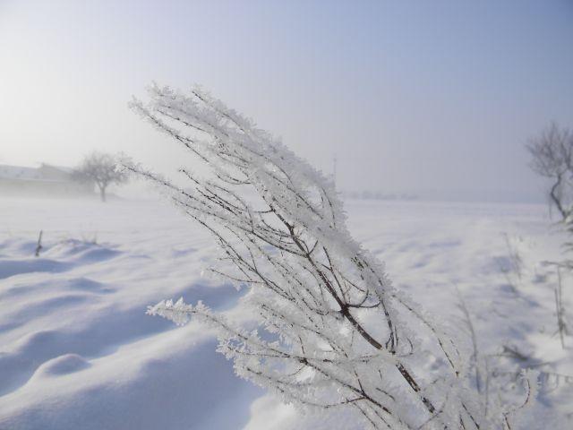 zima, śnieg, pierzynka, krzak