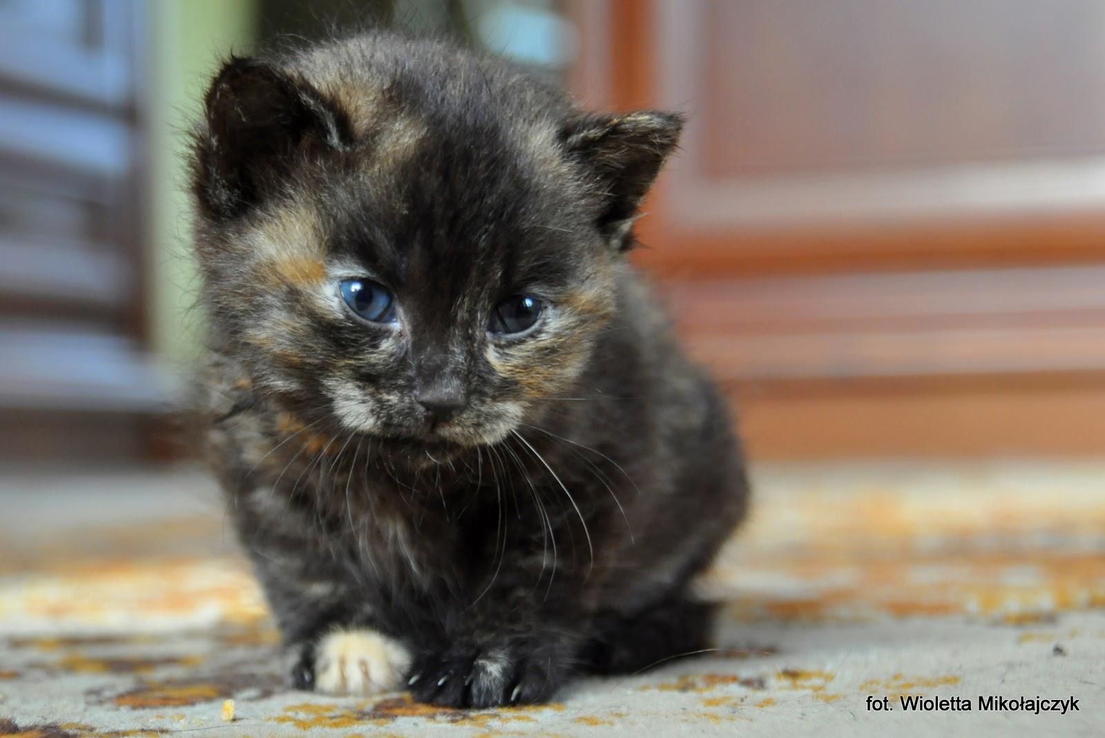 FOTOGRAFICZNIE: Miesiąc z życia ślicznego kociaka.