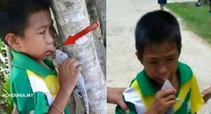 Kisah Sebenar Disebalik Viral Gambar Budak Lelaki Digigit Cicak Tokek
