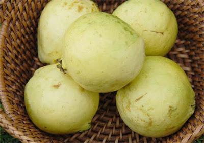 الجوافة غنية جدا بفيتامين ج