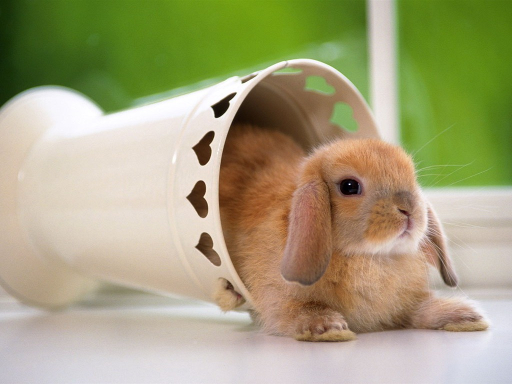 cute and funny pictures of animals 13 bunny. Black Bedroom Furniture Sets. Home Design Ideas