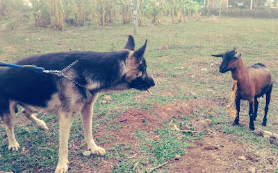 german shepherd dog with his master- photos of the week may 2014 sexyfoosa blog -  for free use - please backlink us thanks