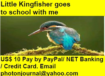 Little Kingfisher goes  to school with me bird story book