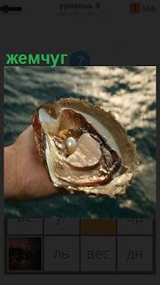 В руке человека открытая раковина и внутри нее находится жемчуг