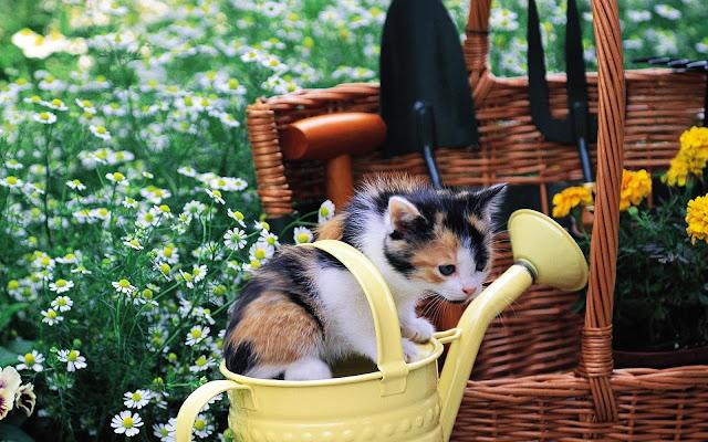 Jong katje in een bloemengieter