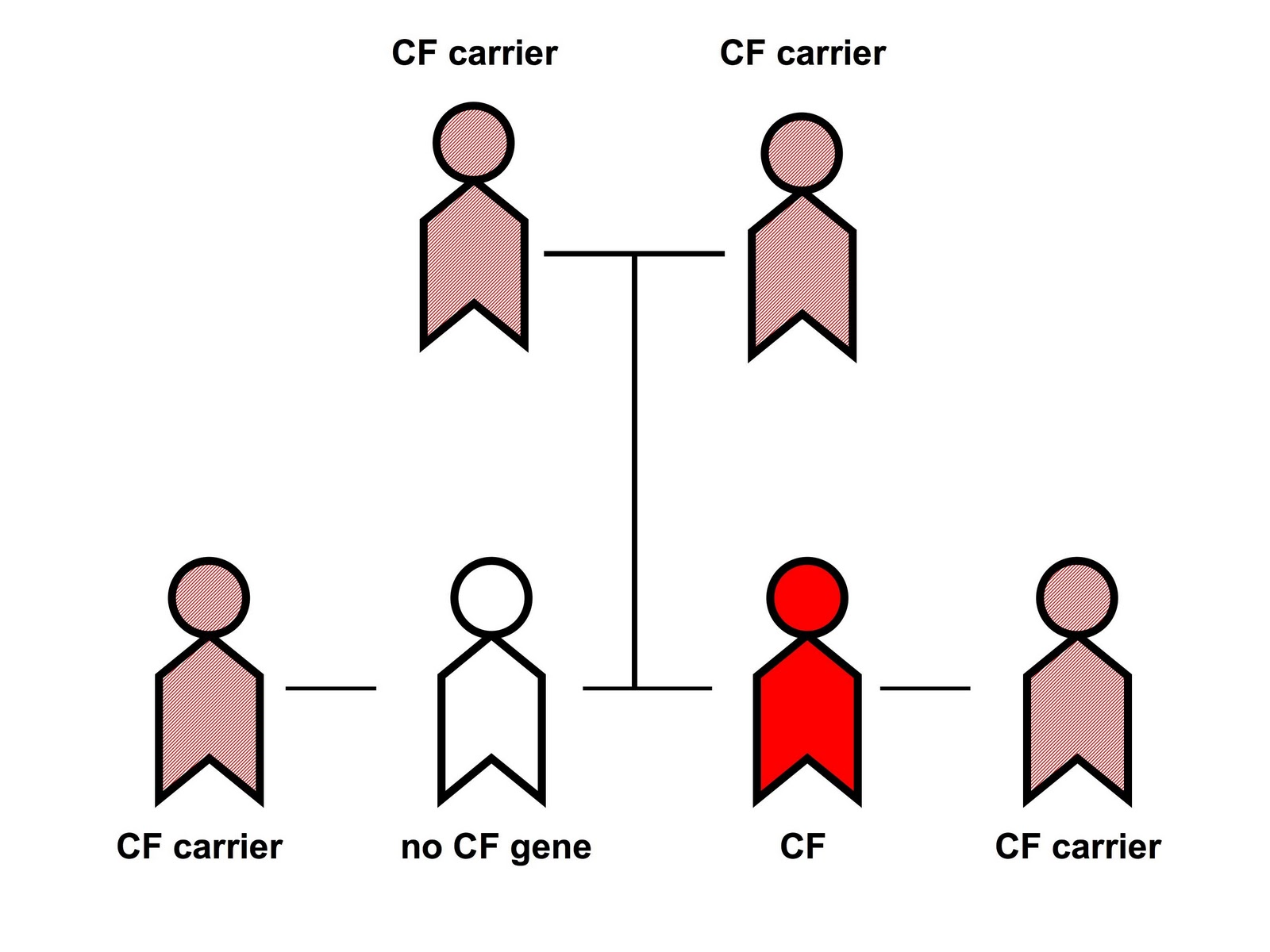 cystic fibrosis what gene is affected