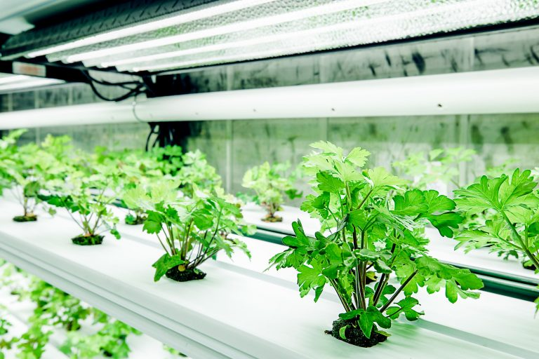 The Seven Benefits of Container Farming