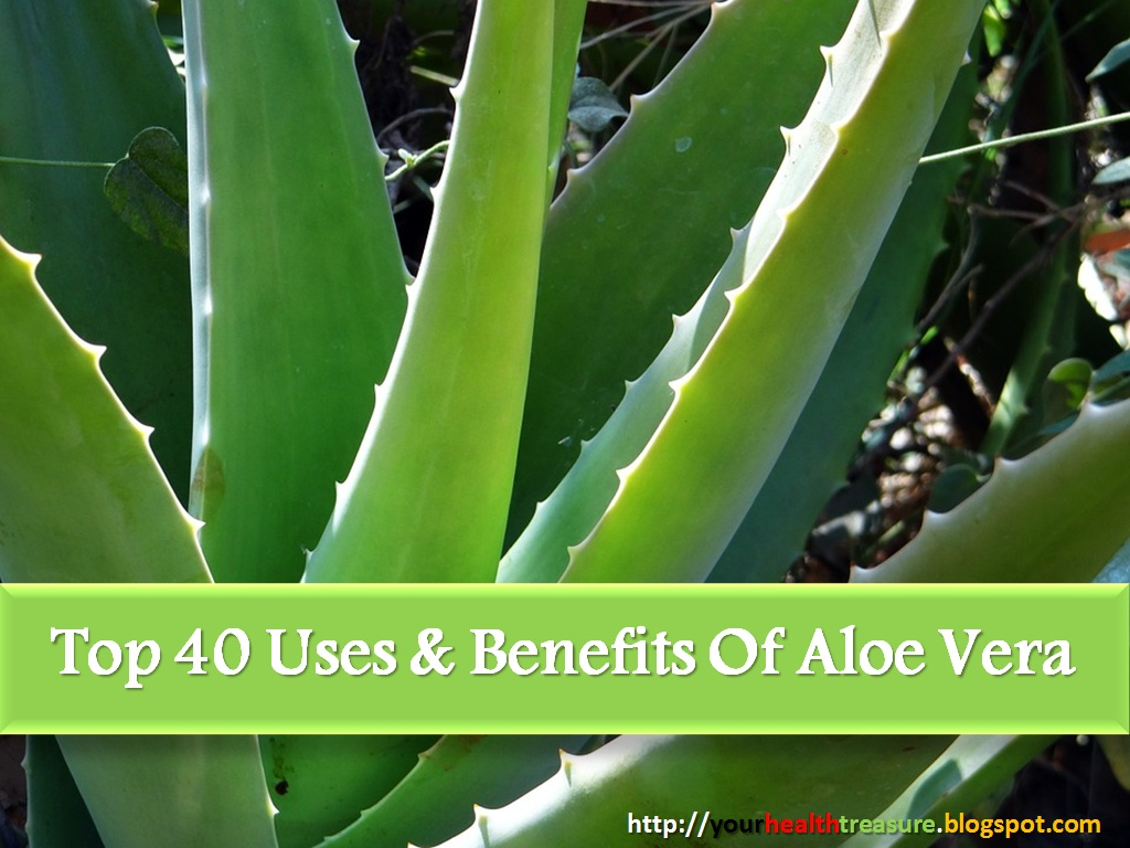 40 amazing aloe vera uses aloe vera benefits health treasure. Black Bedroom Furniture Sets. Home Design Ideas