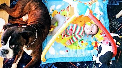 razas de perro grande para niños