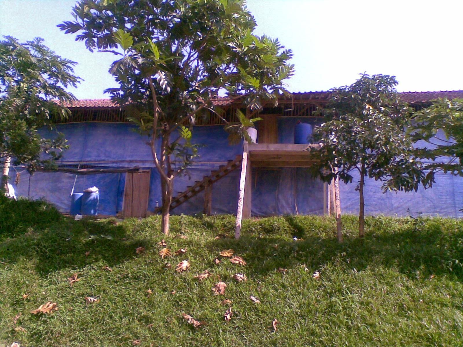 09082014(006) Jual tanah luas 5 Ha, kebun karet yang sudah panen jual tanah di sukaresmi