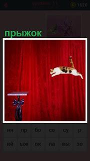 на тумбу прыгает кошка на сцене показывая свое мастерство