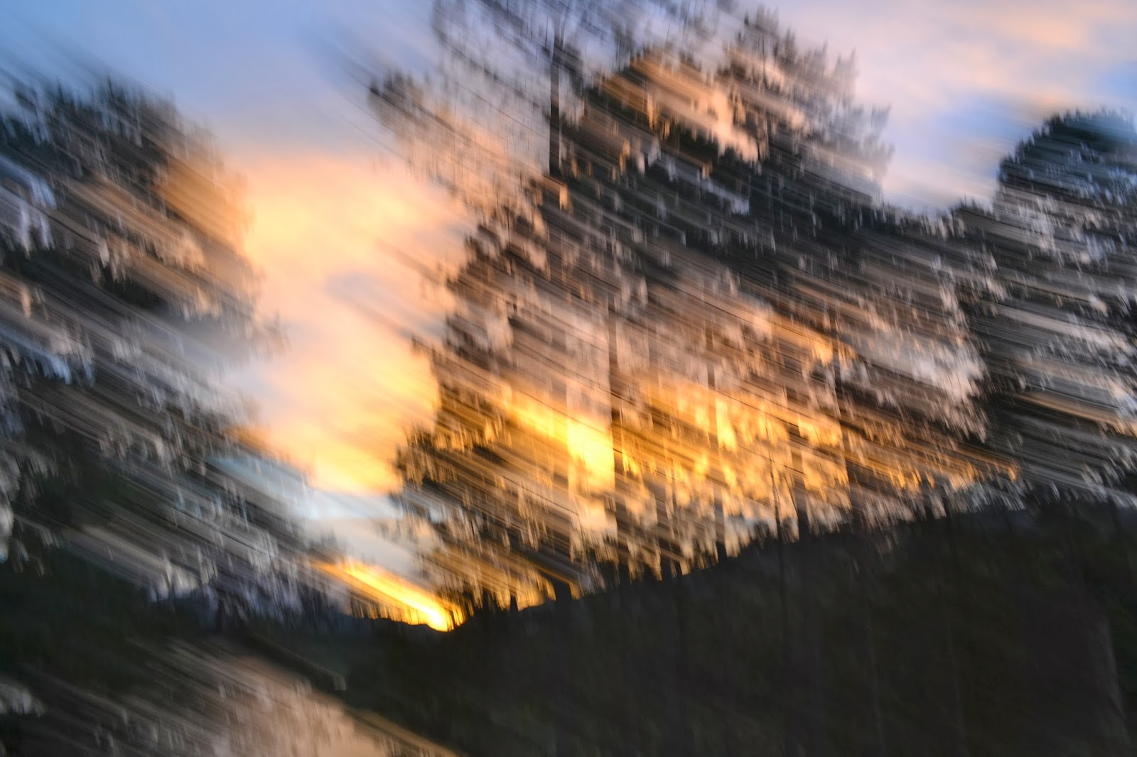 Sunset through the trees blurry
