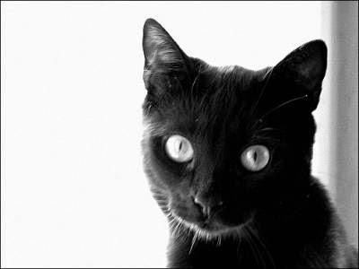 Nasze Koty I Kotki Kot Birmański