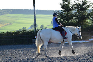 White horse stretching down and relaxing at the end of being ridden
