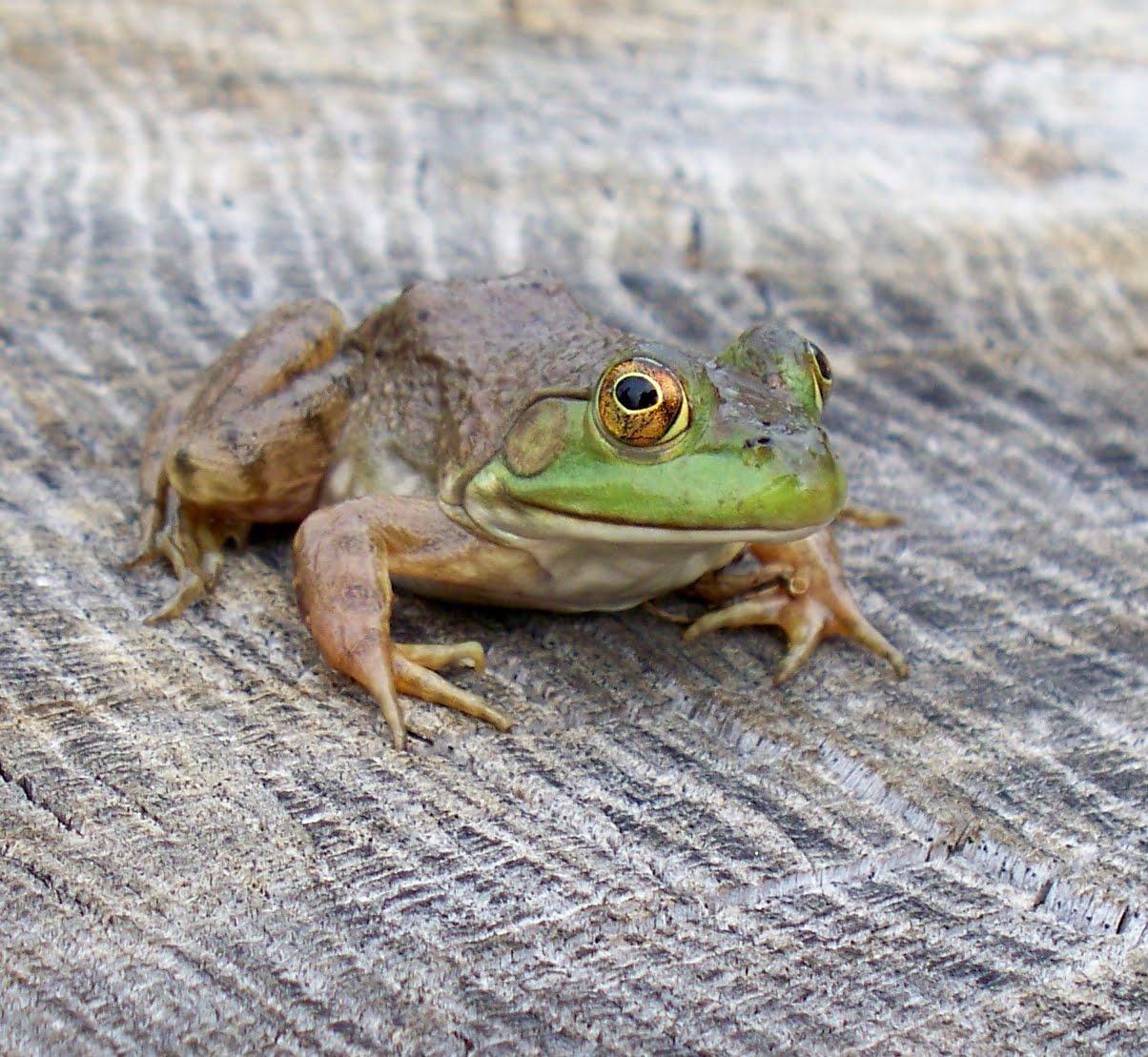 Frogspot