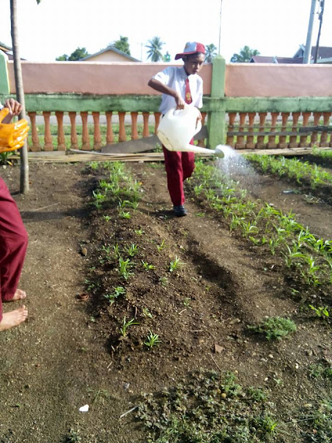 Budidaya Kangkung Ampenan di SD negeri 149VIII Muara Tebo
