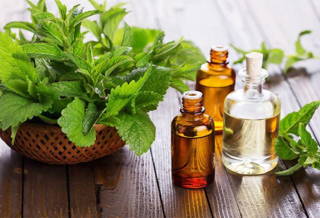 óleo essencial de melaleuca