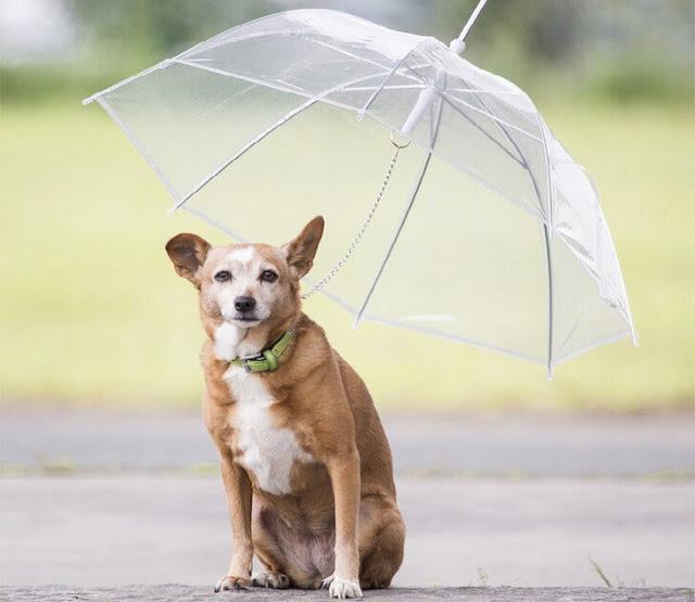 Green Pear Diaries, inventos raros, Dogbrella
