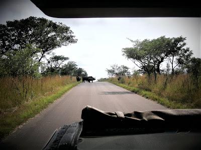 South Africa, Rhinos, Kruger National Park, safari, Open Safari Vehicle