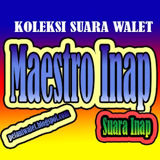 Suara Walet Maestro Inap