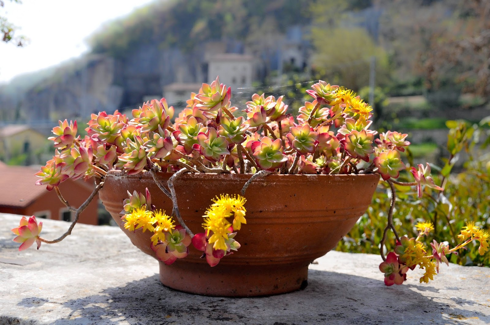 Flower pot in the park of Villa da Schio, Costozza
