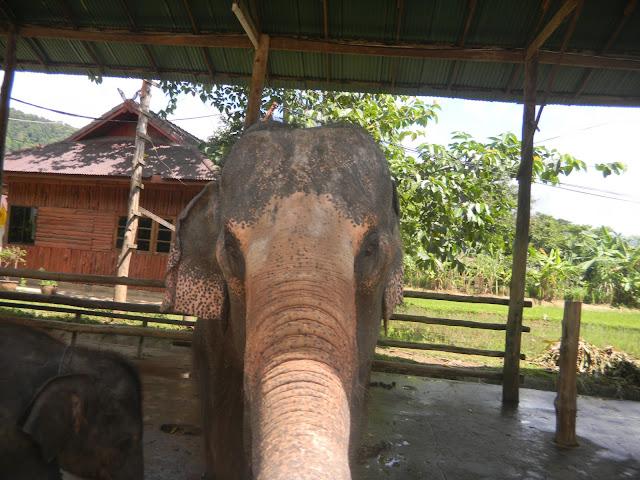 O que você deve saber antes de visitar um Parque de Elefantes na Tailândia?