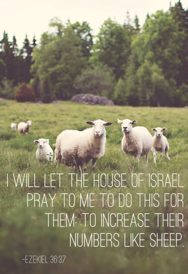 Increase Like Sheep