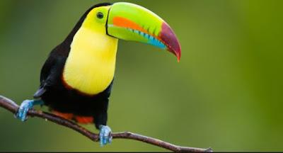 Gambar Fauna Burung Brazil Wallpaper HD