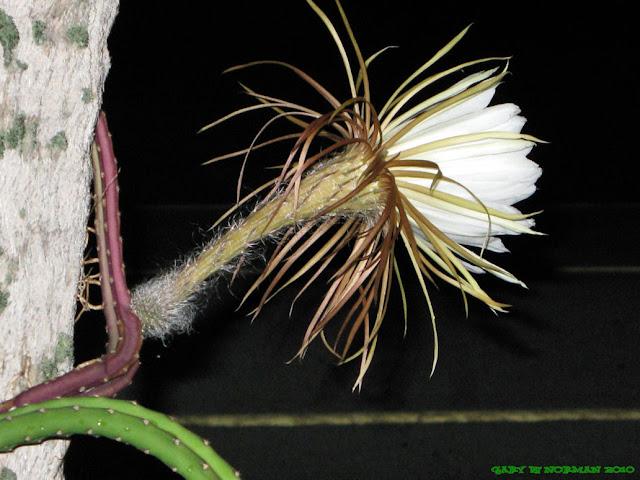 Hình đẹp về các loài hoa, hình ảnh hoa đẹp, hình hoa đẹp, hình hoa đẹp nhất 2013