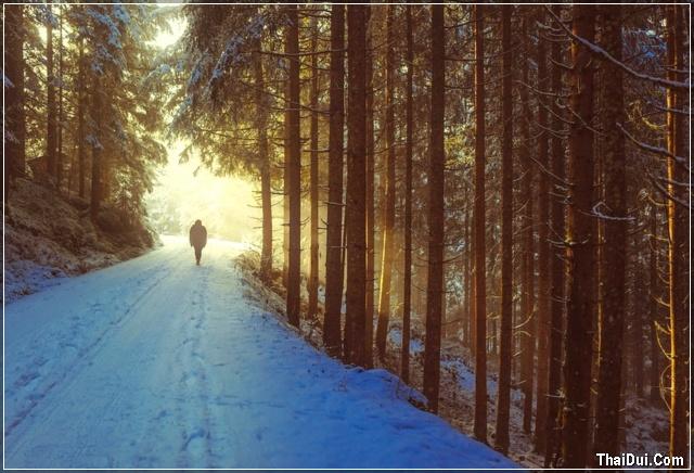 ảnh một mình lặng lẽ đi dưới trời đông
