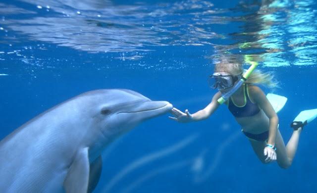 Parque Discovery Cove Orlando - Golginhos