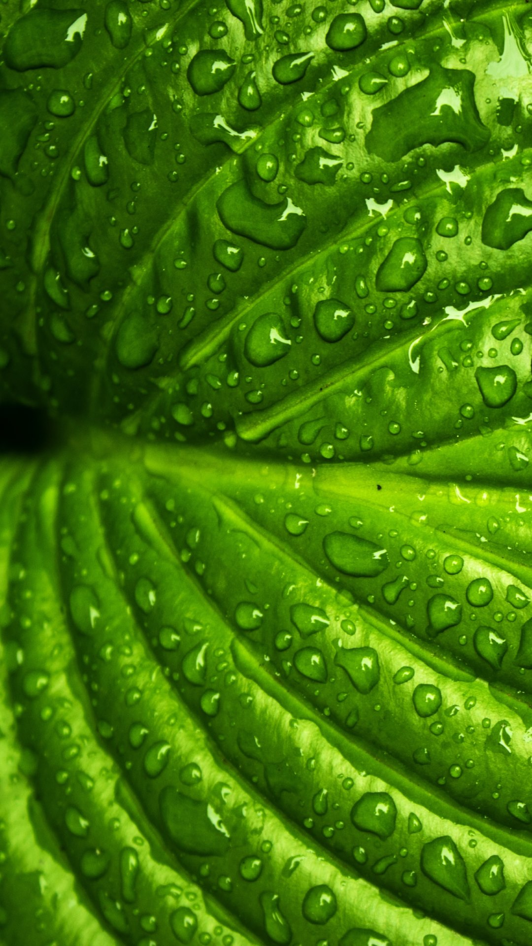 droplets on leaves 4k - photo #12