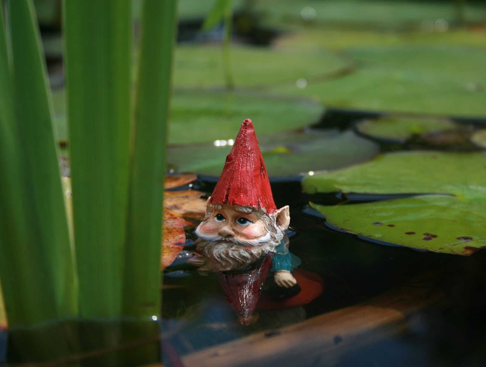 Gnome 4: Eco-Smart Parent: Gnomes And Fairies Spotted At Prairie Ridge