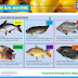 Jenis Ikan Terbaik untuk Kolam Akuaponik, Haruskah Lele?