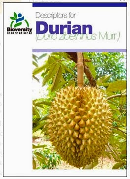 Descriptors For Durian