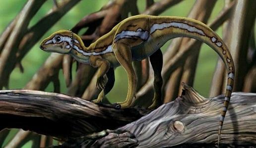 Micropachycephalosaurus Dinozoru Hakkında