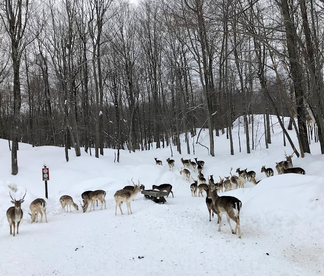 parc omega in winter