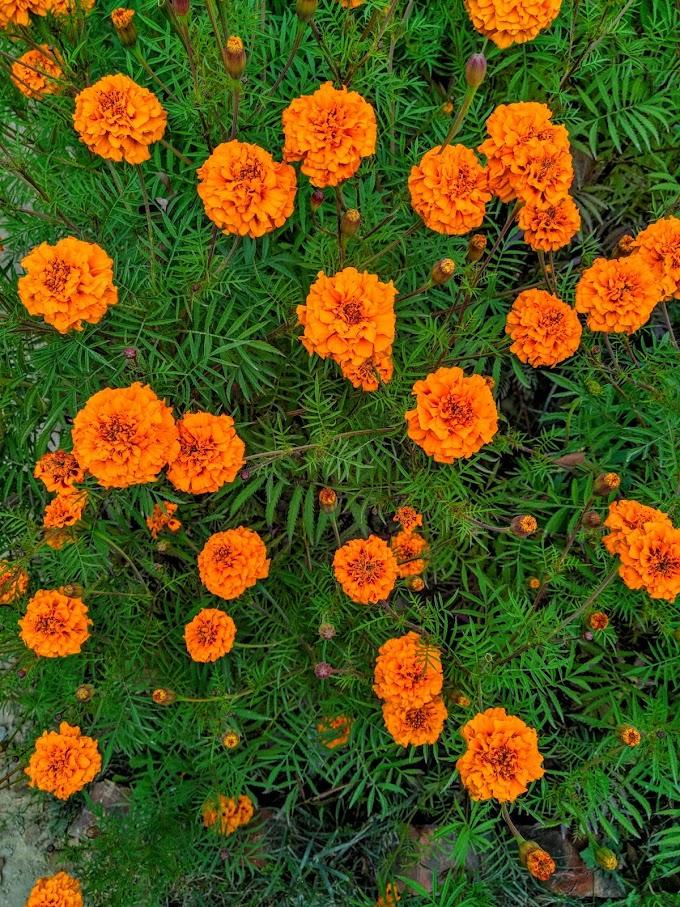 Mobile flower wallpaper photo download