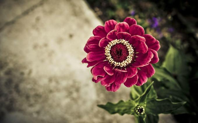 Pantun dengan bunga