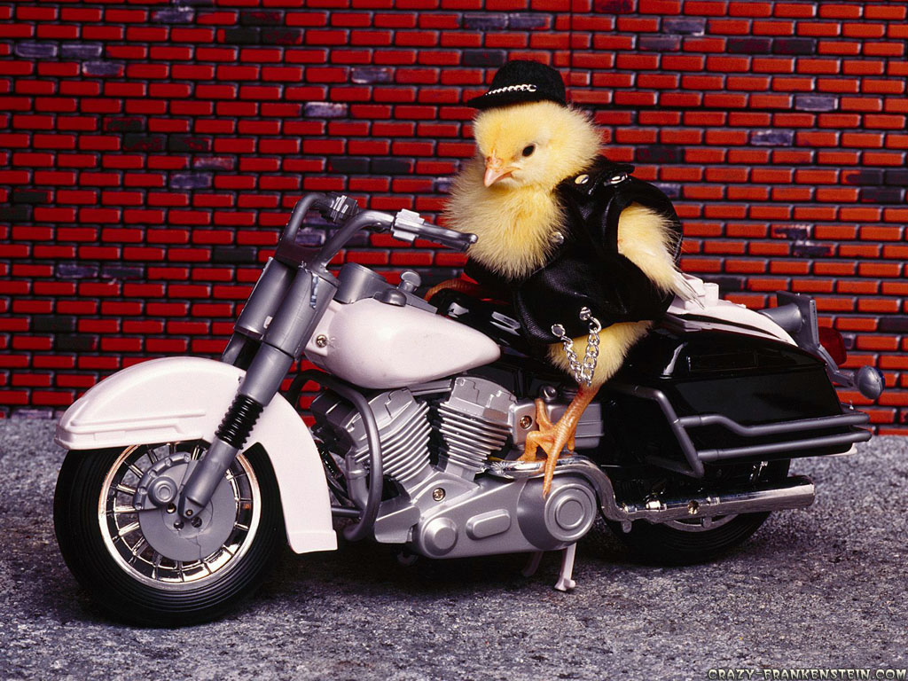 Funny animals on bike beautifu images 2013 all funny - Pictures of chicks on bikes ...
