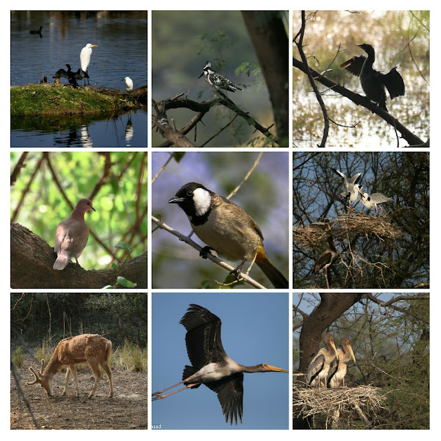 Photos of Keoladeo National Park