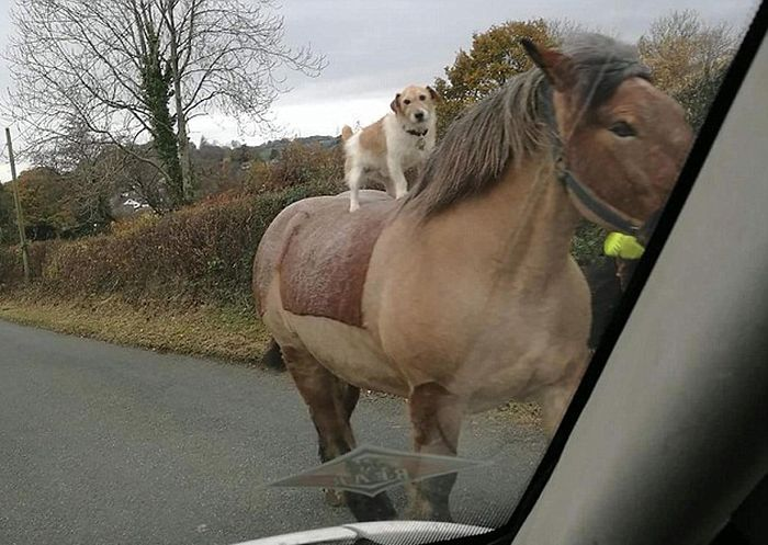 Funny animals of the week - 9 December 2016, cute animal pictures, best animal photos
