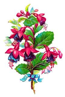 flower fushia floral clipart digital download plant image craft supply