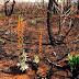 O Cerrado a estação seca e o fogo: entenda essa relação