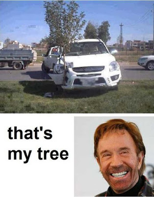 Chuck Norris and his tree - Funny pics