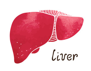 Health-tips-for-a-healthy-liver