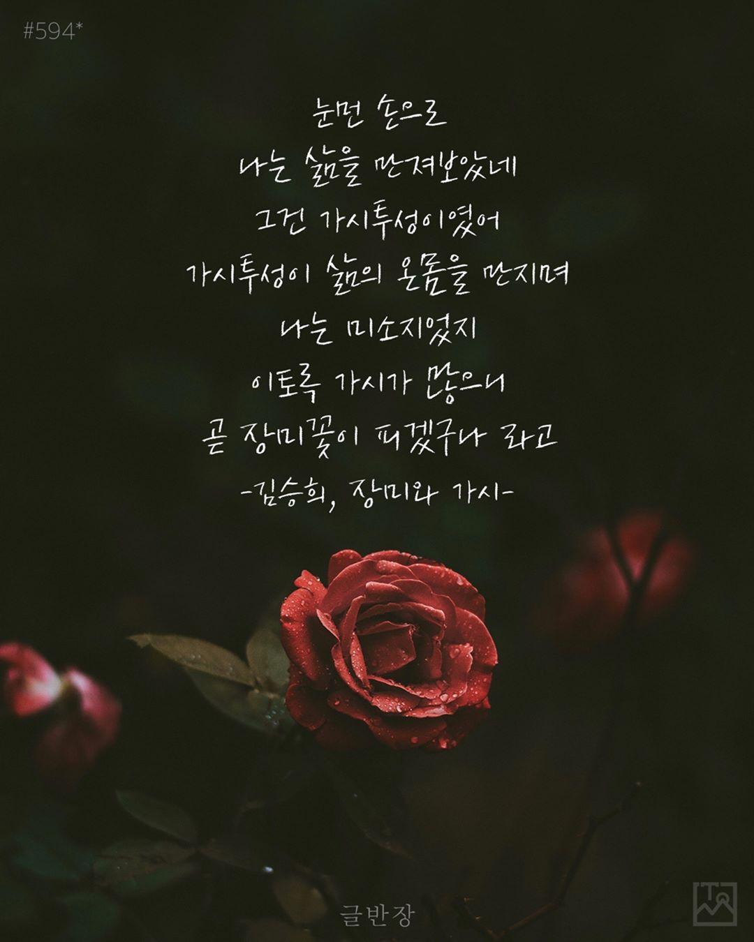 곧 장미꽃이 피겠구나 - 김승희, <장미와 가시>