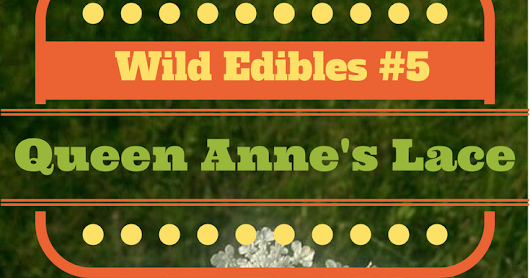 Wild Edibles Wednesday: Queen Anne's Lace or Wild Carrot