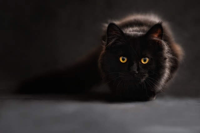 Fakta Menarik Tentang Kucing